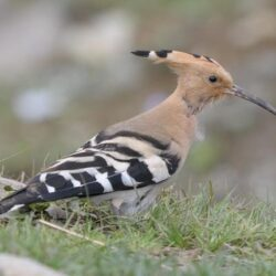 Bhutan Birding Tour