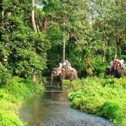 Dooars wildlife Safari