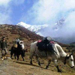 Jhomolhari Base Camp Trek