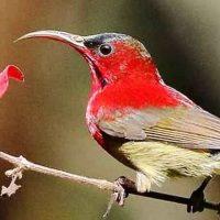 Bird Watching in Darjeeling