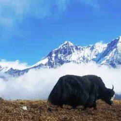 Lhabha Tarum Tsachu Trek