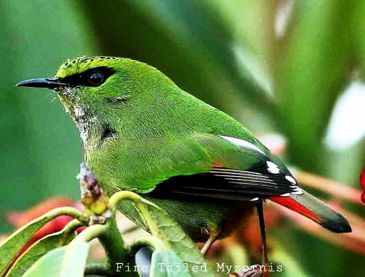 Darjeeling Bird watching Tour